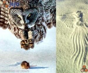 Aniołek Śmierci na śniegu