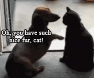Ładne futerko kocie!