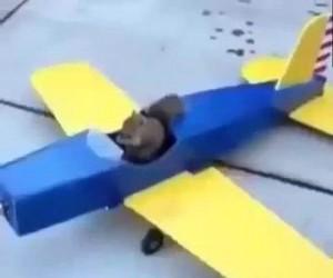 Przygody latającej wiewiórki