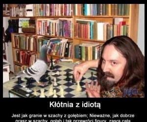 Kłótnia z idiotą