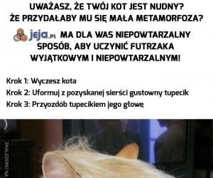 Zafunduj swojemu kotu zupełnie nowy wygląd!