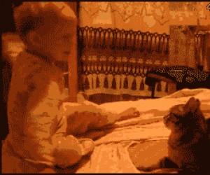 Zadarłeś z niewłaściwym kotem, wymoczku!