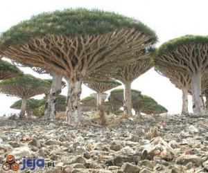 Drzewa jak grzyby