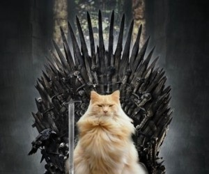 Gra o Koteły