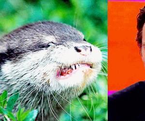 Benedict jest wydrą pod przykrywką