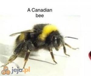 Dzisiaj dowiemy się czegoś nowego o pszczołach