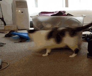 Nieskończona zabawa dla kota