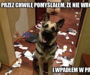 Ciepłe powitanie przez psa!