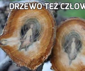 Drzewo też człowiek!