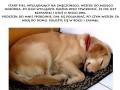 Pies, który chciał się czasem wyspać