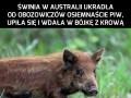 Takie rzeczy, tylko w Australii