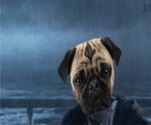 Psy Jedi wielką siłę mają w sobie
