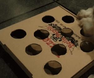 Tyle zabawy z piłeczki i pudełka od pizzy