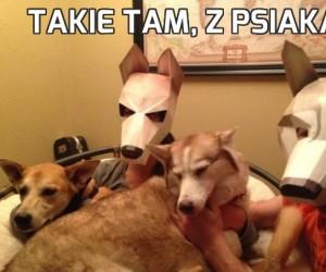 Takie tam, z psiakami