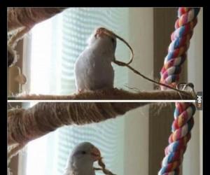 Ptaki to takie mądre zwierzęta...