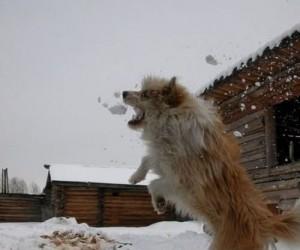 Mniam, mniam, mniam, śnieg