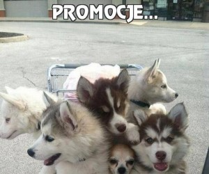 Promocje...