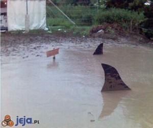 Uwaga na rekiny w ogródku