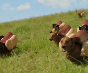Majestatyczne hot-dogi w naturalnym środowisku