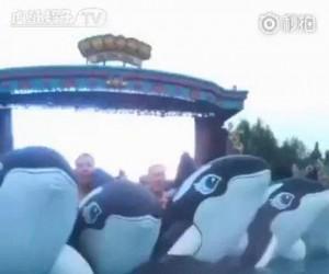 Fala wielorybów nadciąga!