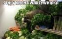 Stały klient warzywniaka