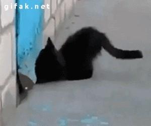 Kot pomaga zwiać psu