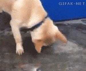 """Pies """"ratuje"""" rybę"""