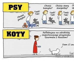 Różnica między psem a kotem