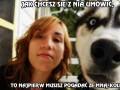 Prawdziwy pies obronny