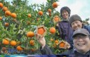 Kto powiedział, że pomarańcze muszą być okrągłe?
