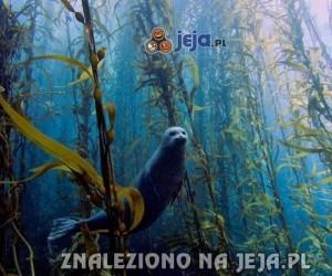 Podwodny świat i jego mieszkaniec