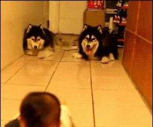 Psy raczkujące z dzieckiem