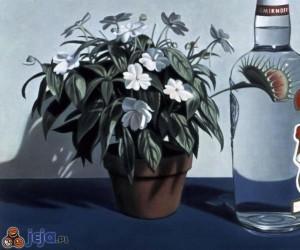 Smirnoff - roślinka