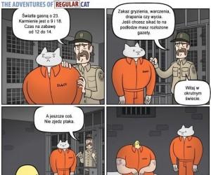 Biznesowy kot w więzieniu