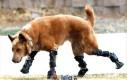 Tym razem to pies spadł na cztery łapy!