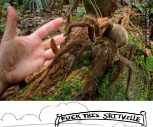 Milusi pajączek...?