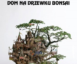 Dom na drzewku bonsai