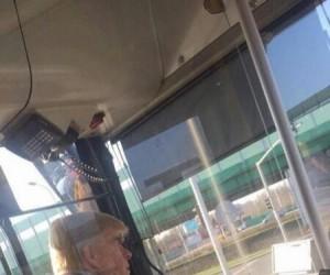 Tym autobusem żaden Meksykanin nie pojedzie