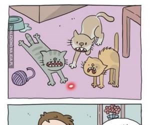 Głupie zwierzęta