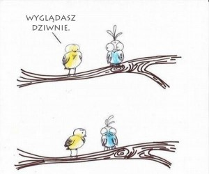 Dziwny ptaszek