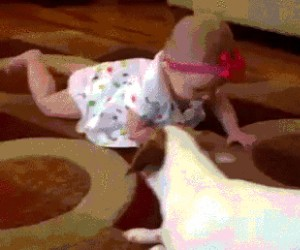 Pies uczy dziecko raczkowania
