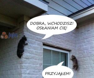 Co robią koty, gdy nie ma nas w pobliżu...