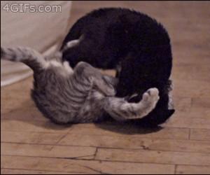 Koty w zwolnionym tempie