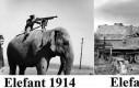 Ewolucja słoni w ciągu 30 lat