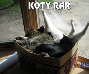 Koty.rar