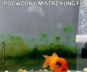 Podwodny mistrz kung fu