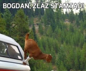 Bogdan, złaź stamtąd!