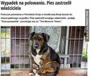 Pies zastrzelił właściciela