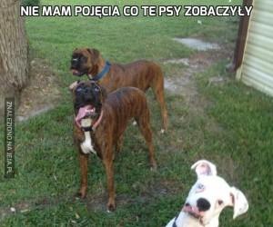 Nie mam pojęcia co te psy zobaczyły