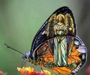 Podrasowany motyl